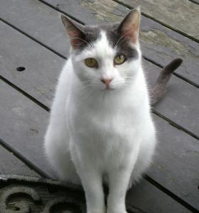 Pawsitive Personal Pet Care client cat